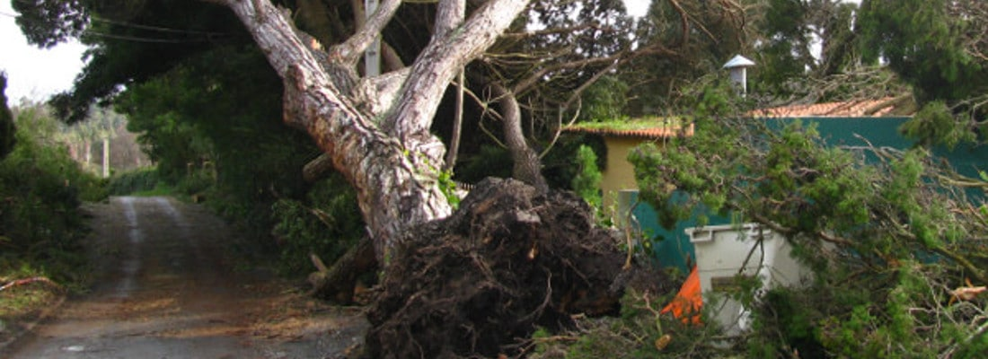 Tree Removal Bourne